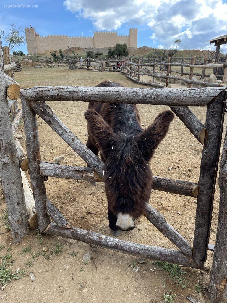 Puy du Fou España: burro